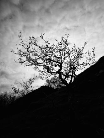 Tree at the fairy glen